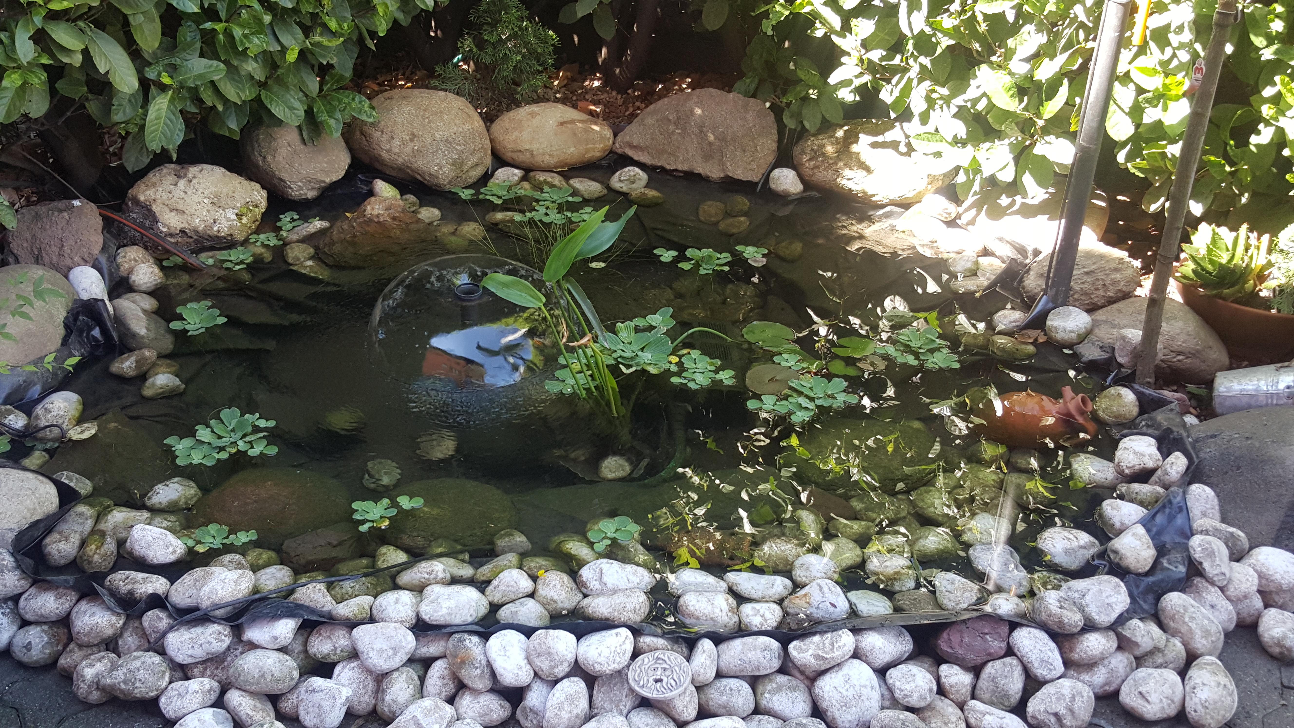 Come costruire un laghetto fai da te fardasefapertre for Laghetto giardino vetroresina